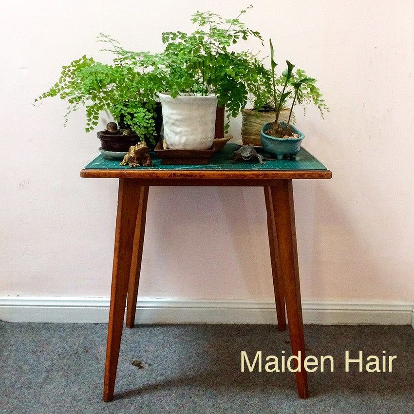 Maiden Hair by PLANT PORTRAITS